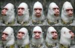 Albino Gorilla mask for sale