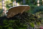 Mushroom Part II by cg-photography92