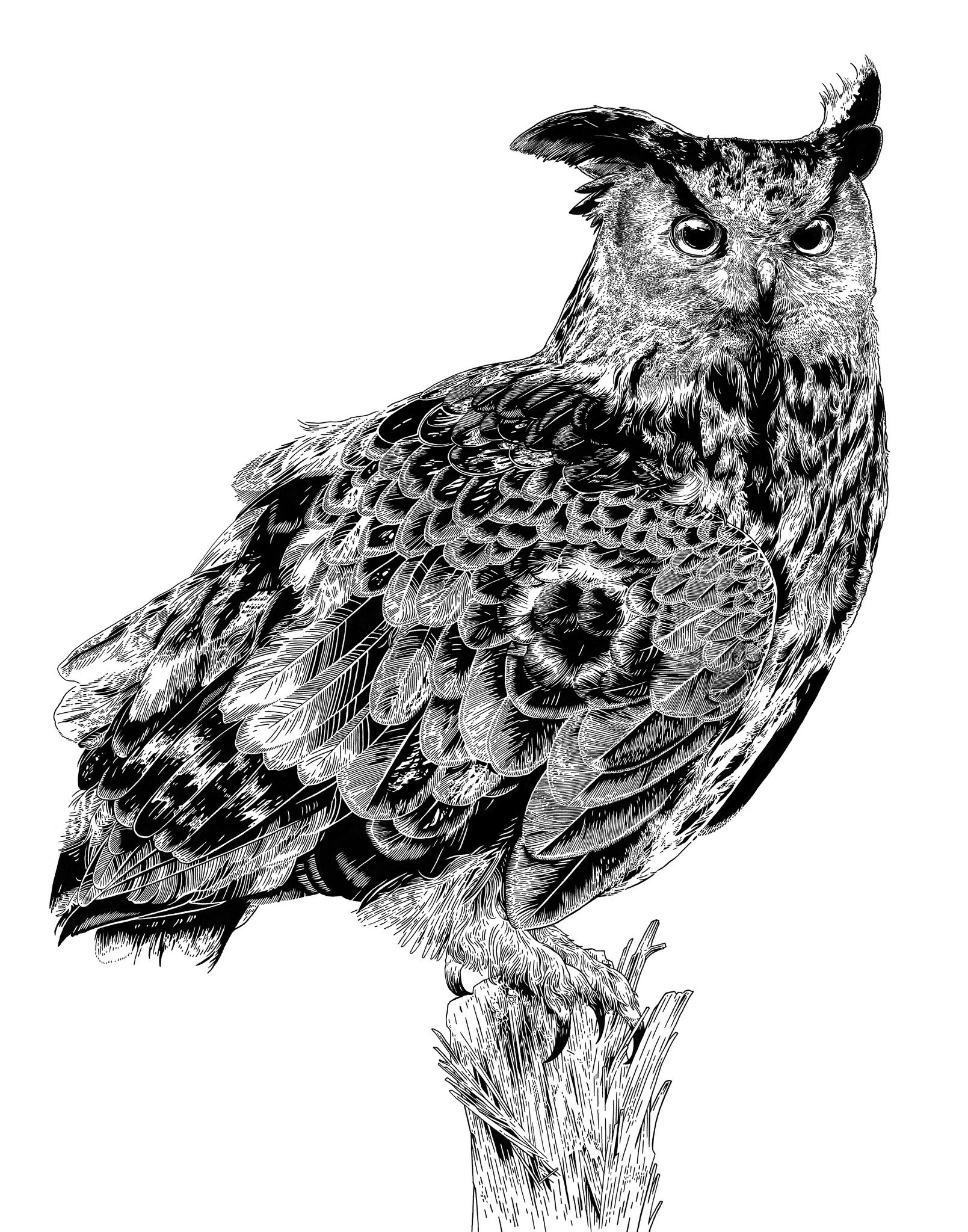 Owl by rghayati