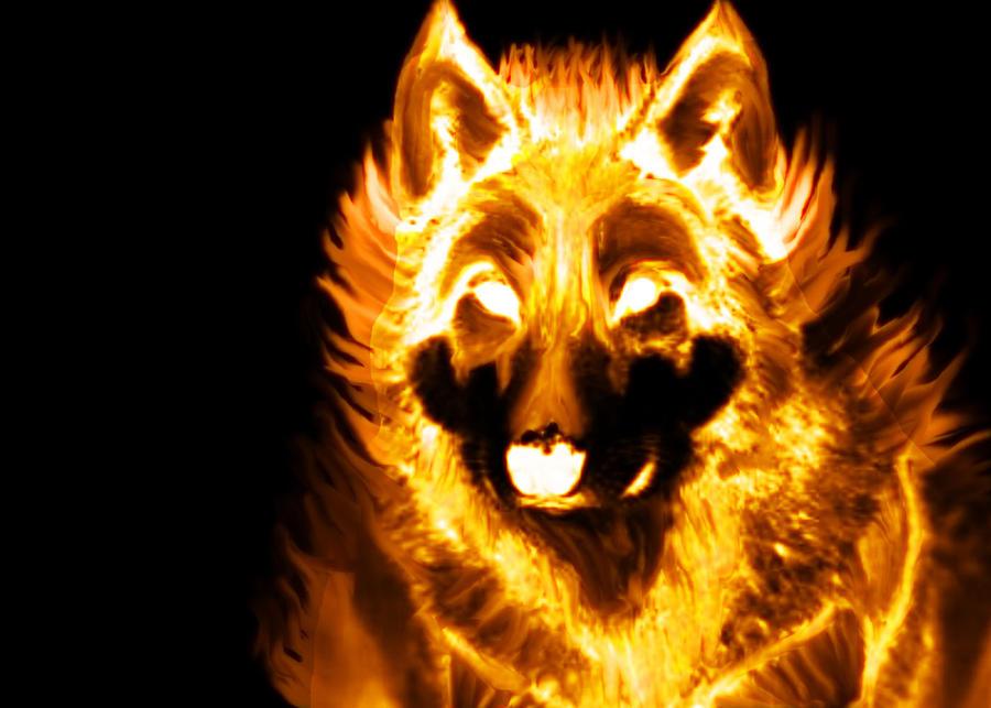 Fire Wolf by Lamar823