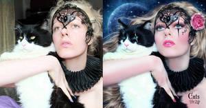 Cats - BA