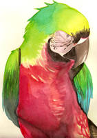 Watercolor Macaw by Riviel