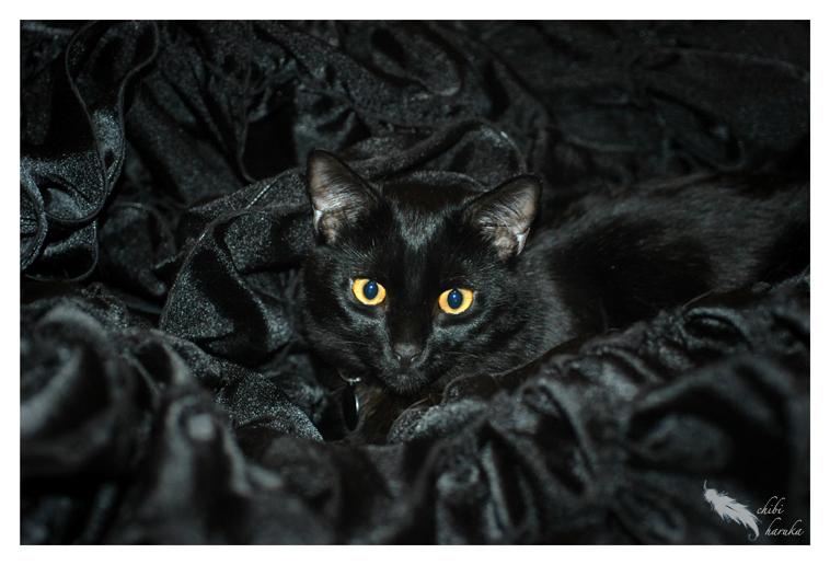 black on black by chibiharuka