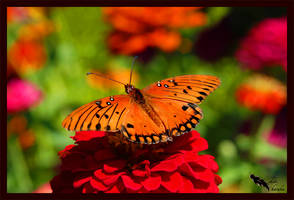 garden butterfly by chibiharuka
