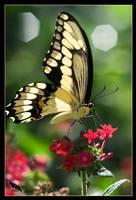 back to butterflies by chibiharuka