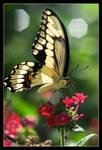 back to butterflies