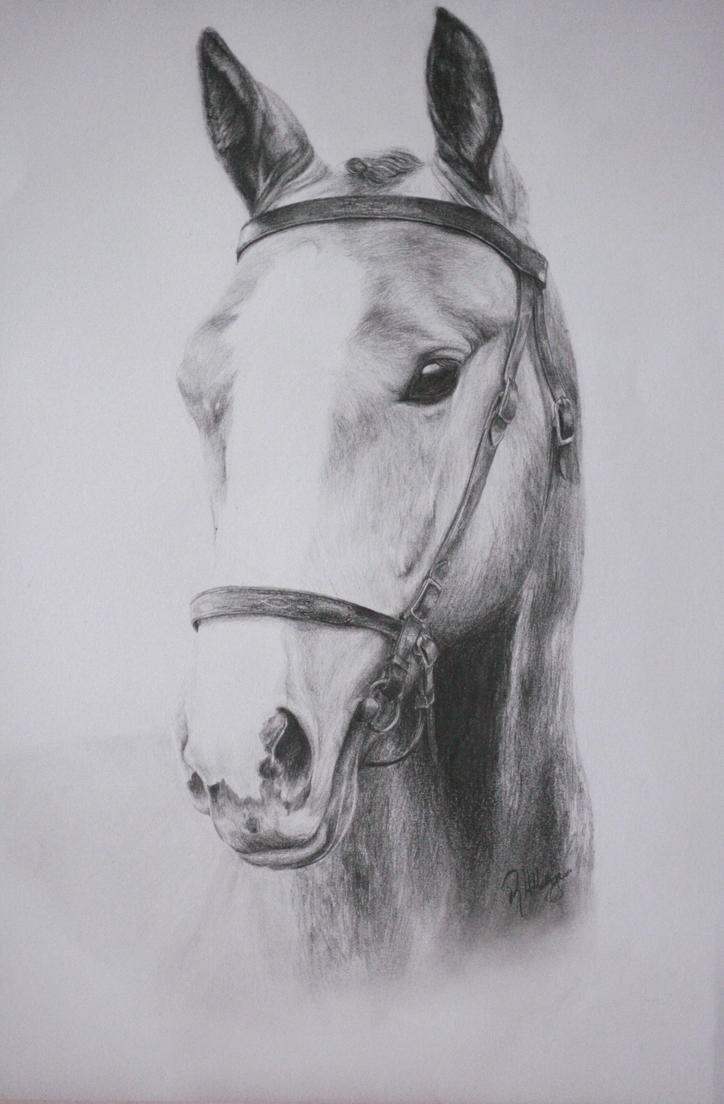 Pretty horse by Kennelwood on DeviantArt