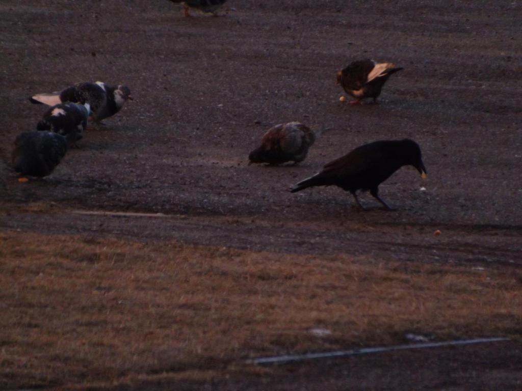 2014.11.13 birds 3 by Apkx