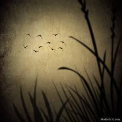 Les Oiseaux de Passage by MorKroM