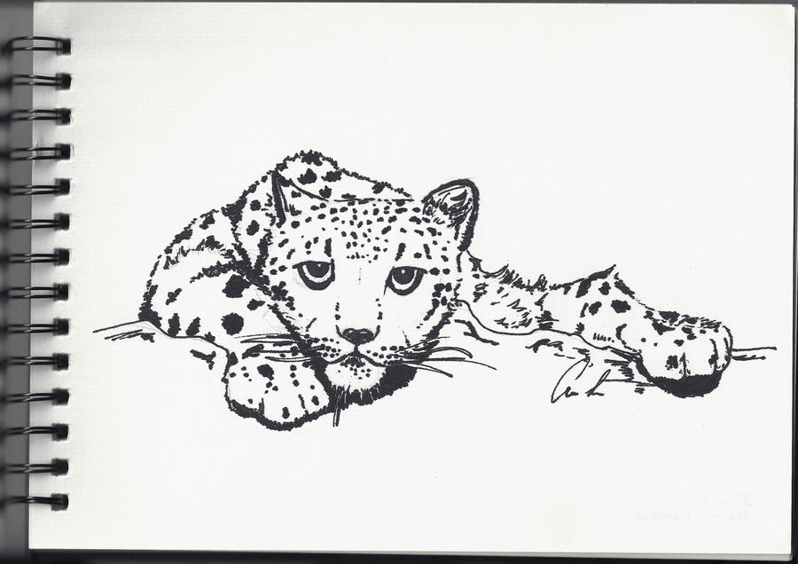 Snow leopard drawing - photo#22