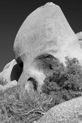 Skull with Nosehair by SZenz