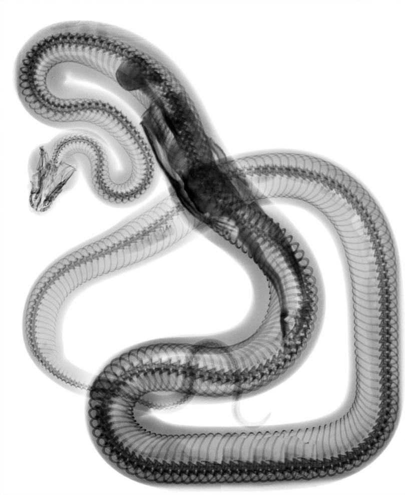 Японка со змеей 19 фотография