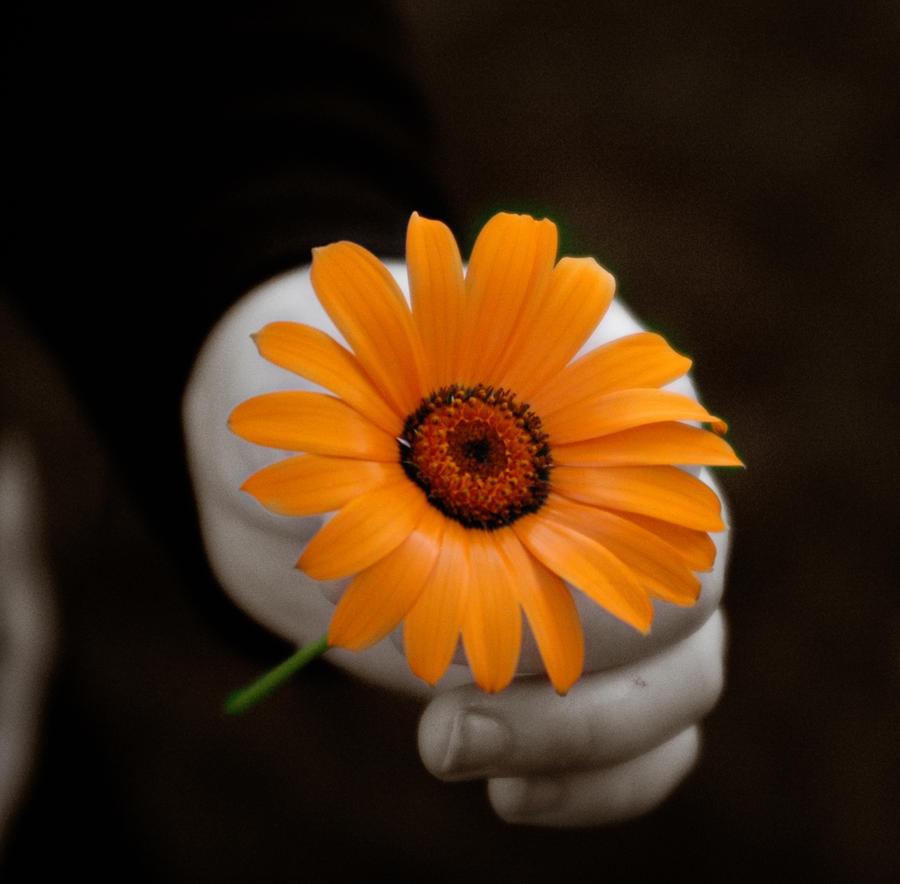 Orange - Page 3 Her_Flower_II_by_WriterOfWolves
