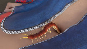 Claire  the Centipede 8