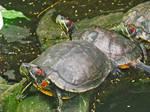 wet reptiles
