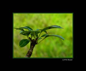 Little Bonsai by FaerieBert