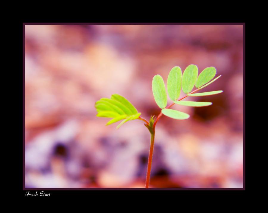 Fresh Start by FaerieBert