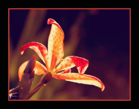 Tangerine Dream by FaerieBert