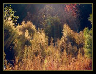 Autumnal Splendour by FaerieBert