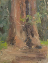 Giant Redwood - Plein Air Painting