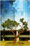 Next Tree by LaS-BR
