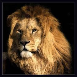 Majestic king by LaS-BR