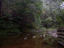 Creek Stock 1 by tidewater194
