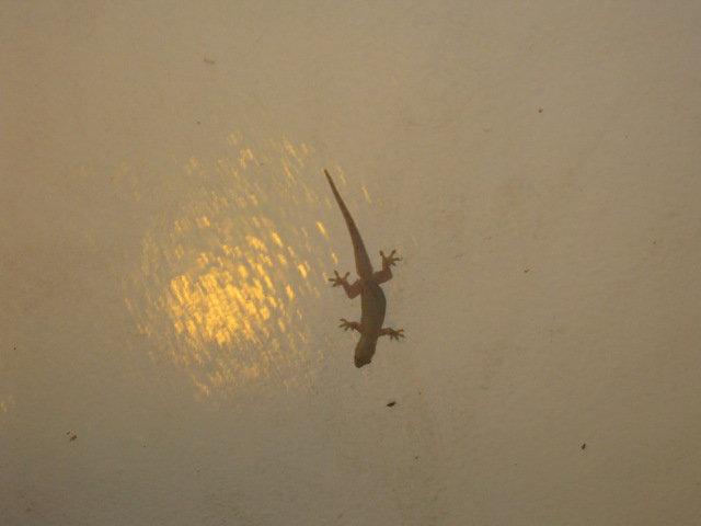Philippine House Lizard by ekoi1995