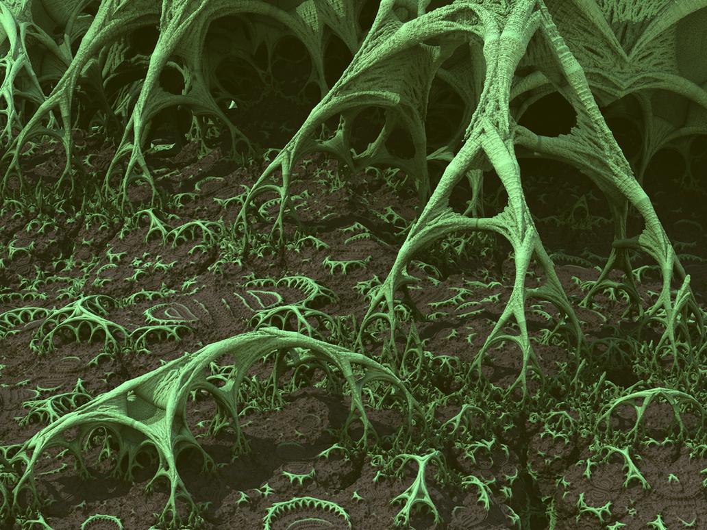 Mangrove Roots by krompulos