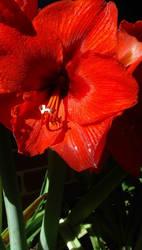 flower by bridgette