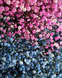 Kunming Flowers 1
