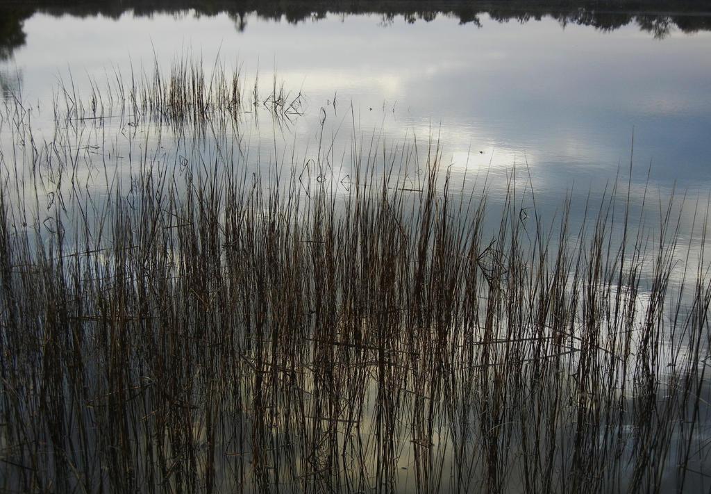 Marshland by KDMB