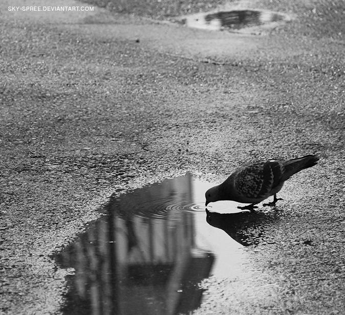 Pigeon by sky-spree