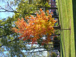 A Fiery Autumn