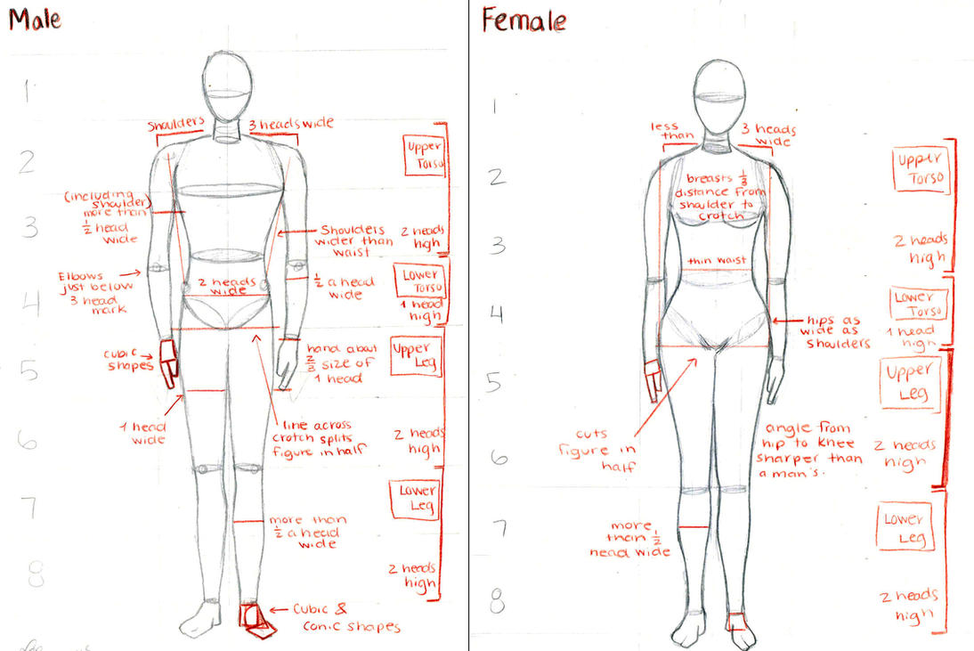Male And Female Anatomy By Lei X On Deviantart