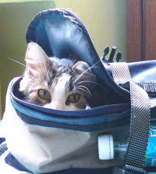 cat in bag by Fantasy33