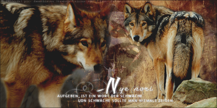 Wolf character- banner01 by LumaStern