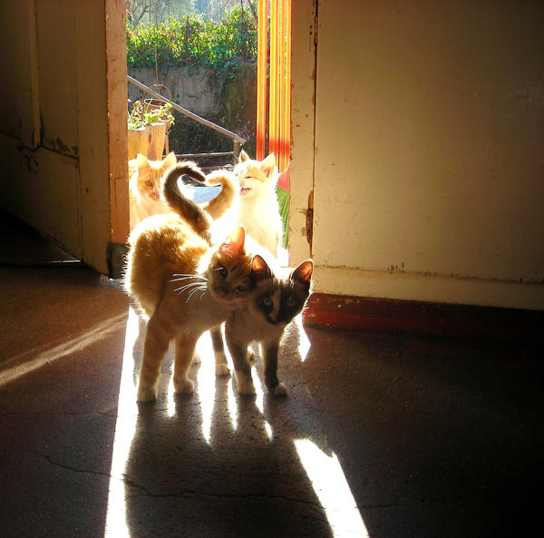 Love cats by AnaCB