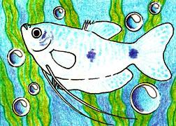 ACEO 8 - Blue Gourami by LuthienNightwolf