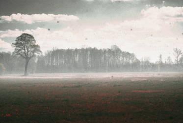 A haunted shrubbery by ewzatorska