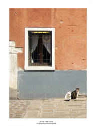 I See Two Cats by Illusionsofthespleen