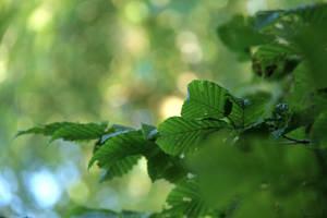 Green Green Green by Laoki