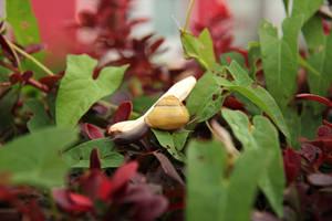Snail Trail by Laoki