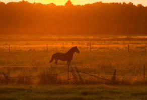 Sunny Horse by Laoki
