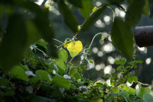 Jungle by Laoki