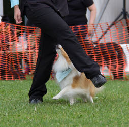 Dog Dancers #1 - Dogdays 2016