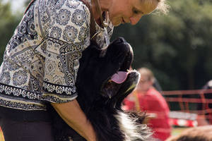 Landseer Breed Presentation - Dog Days 2016