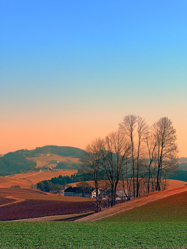 Trees, panorama and sunset | landscape photography by patrickjobst