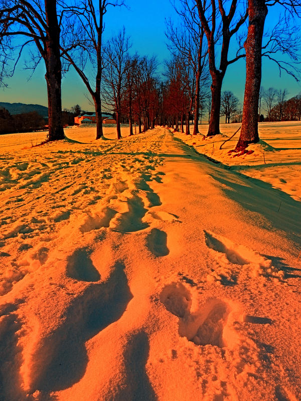 Winter avenue trail at sundown by patrickjobst