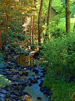 Forest, a river, a valley and summertime